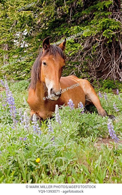 Wild Horse Rocky Mountains USA