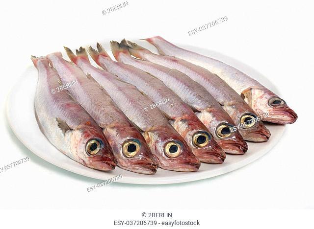 seven fresh fishes in white china dish