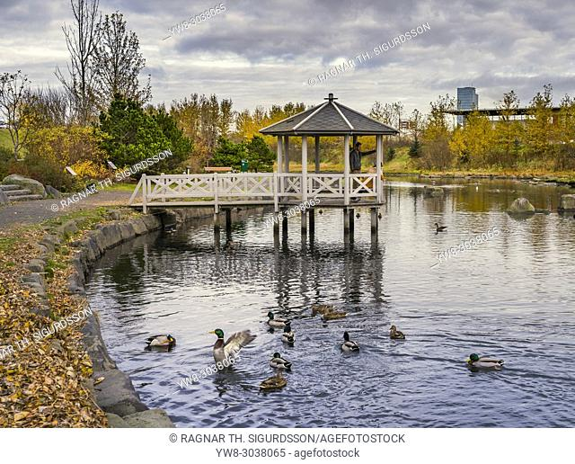 Birdlife at a small pond, Gazebo in the background, Autumn, Kopavogur, Iceland