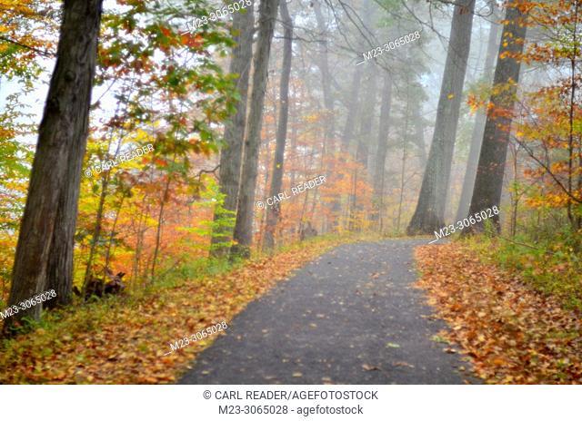 Autumn in soft focus by a walking path, Pennsylvania, USA
