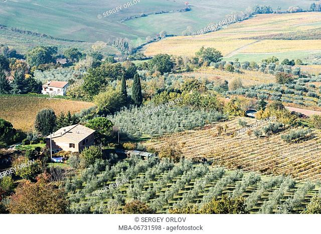 A typical Tuscany landscape with vast green, yellow and red vineyard fields, rows of olive trees, small buildings, cypress alleys and colorful autumn forest