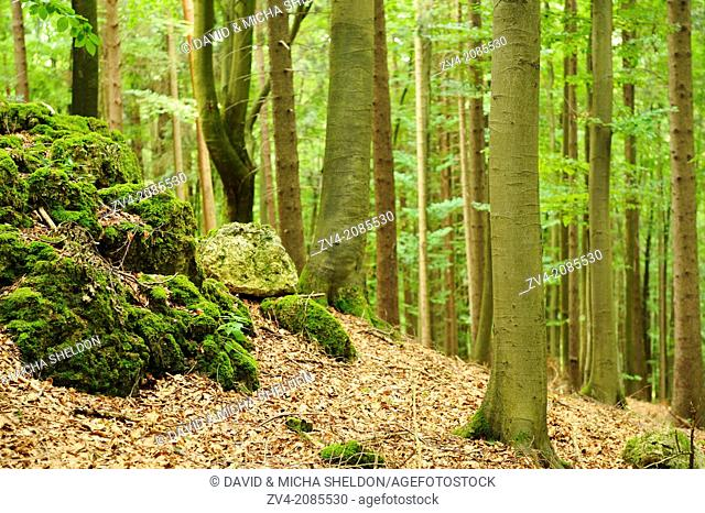 Landscape of a forest in Upper Palatinate, Bavaria, Germany
