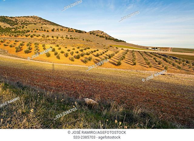 The Lomas in Noez. Toledo. Castilla la Mancha. Spain. Europe