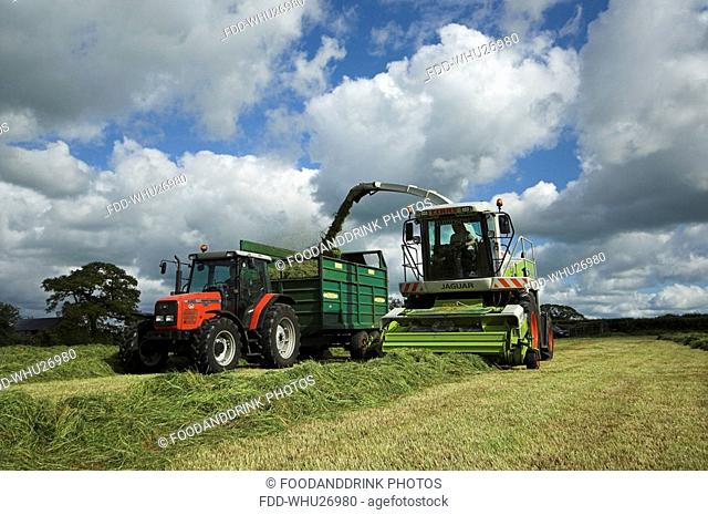Silaging with a self propelled harvester