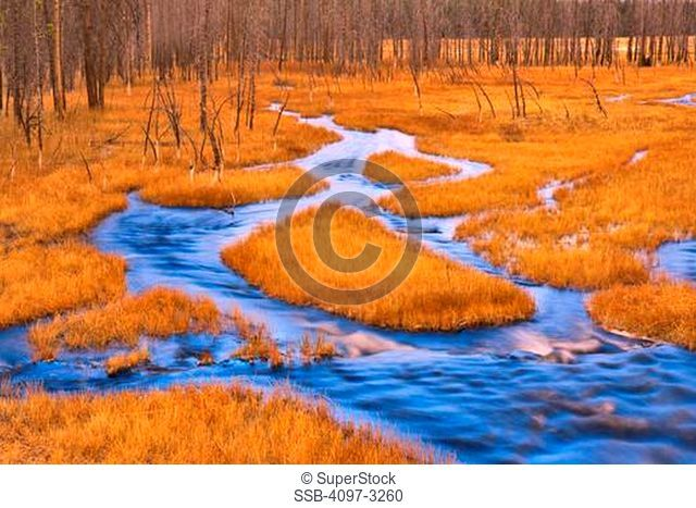 Stream flowing through a forest, Firehole River Valley, Yellowstone National Park, Wyoming, USA