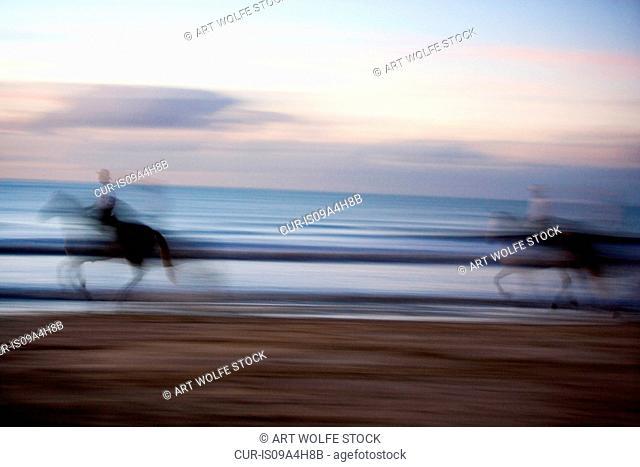Lusitano horses and vaqueros