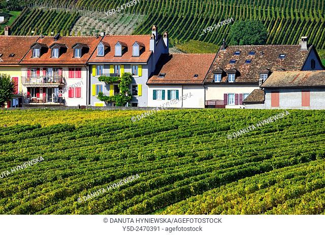 Europe, Switzerland, Canton Vaud, La Côte, Morges district, Fechy near Aubonne, Féchy, houses in a row facing vineyards, early autumn