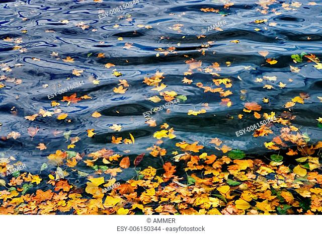 Autumnly colored leaves on water-level, Southern Moravia, Czech Republic, Central Europe