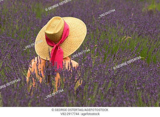Woman in straw hat in lavender, Mountainside Lavender, Washington County, Oregon