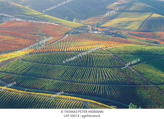 Vineyards Duas Quintas, Castelo Melhor Montanhas, Portugal