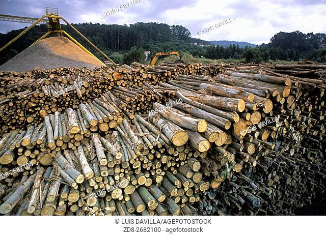 Ence is one of the main European producers of eucalyptus pulp, the most important Spanish company in the production of renewable energy using forest biomass and...