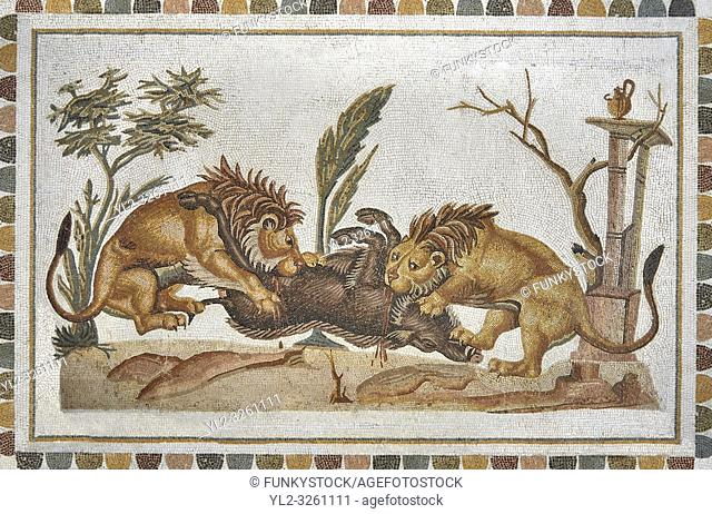 Picture of a Roman mosaics design depicting Lions eating a boar, from the ancient Roman city of Thysdrus. 2nd century AD, House of the Dionysus Proccession