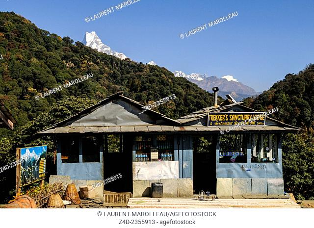 Banthanti Village with Machapuchare in Background, between Ghorepani and Tadapani. Myagdi District, Dhawalagiri Zone, Annapurna Conservation Area