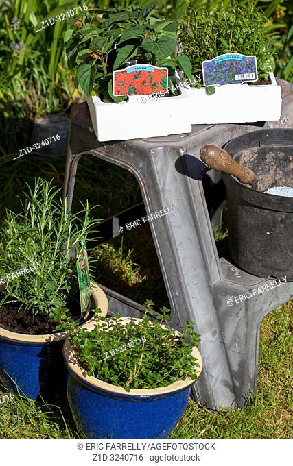 Spring gardening with plants for potting and planting Scotland
