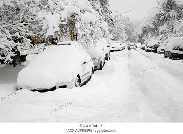Cars, trees and street covered in snow after an early winter snowstorm, Point Grey, Vancouver, British Columbia, Canada