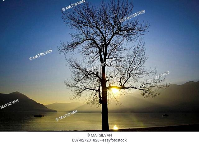 Tree in sunset over an alpine lake
