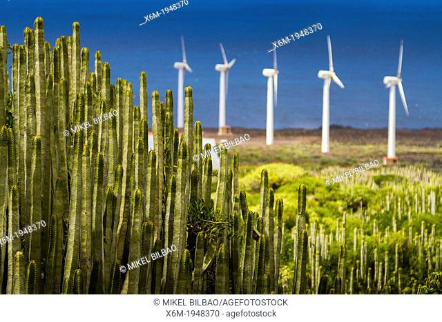 Canary Island spurge (Euphorbia canariensis) and wind turbines in Punta Teno. Tenerife, Canary Islands, Atlantic Ocean, Spain