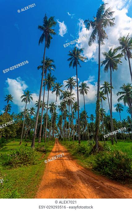 road through the palm forest