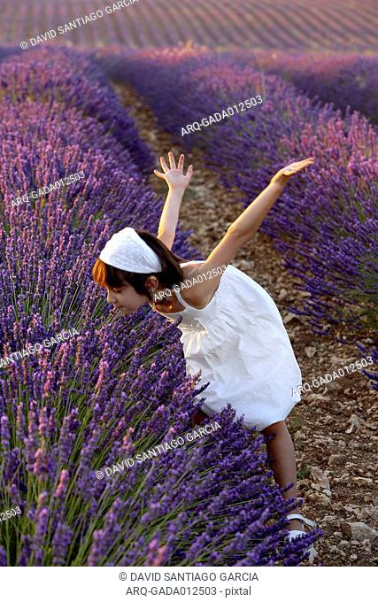 Small Girl Wearing White Dress Smelling Lavender In The Field Of Lavender Plantation