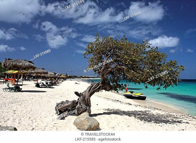 West Indies, Aruba, Dibi Divi Tree, Eagle Beach