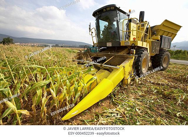 Corn crops, Oco, near Estella, Navarre, Spain