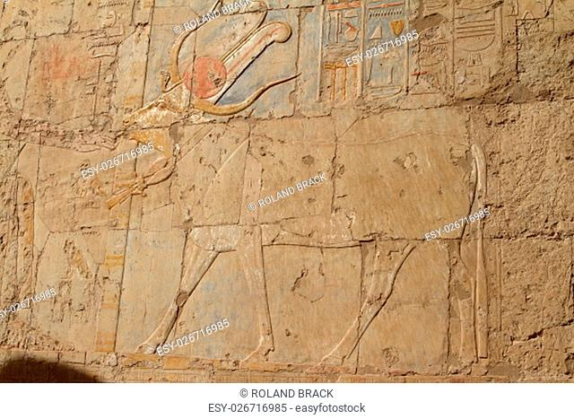 relief in the temple of hatshepsut in egypt