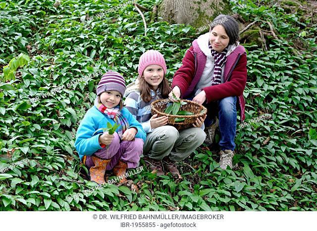 Mother and children picking Ramsons (Allium ursinum)