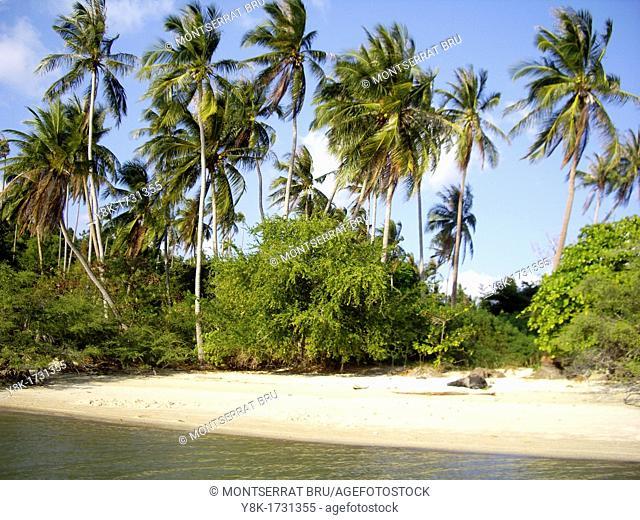 Deserted paradisiac beach with coconut trees east of Thong Sala, Koh Phangan, Thailand
