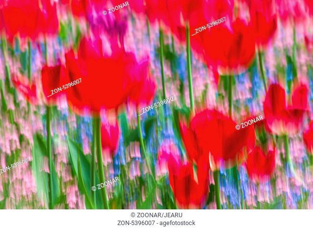 Blumenimpressionen, Monet