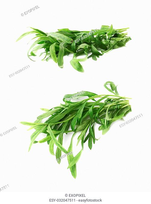 Pile of green leaves of the Tarragon Artemisia dracunculus perennial aromatic culinary herb isolated over the white background, set of two foreshortenings