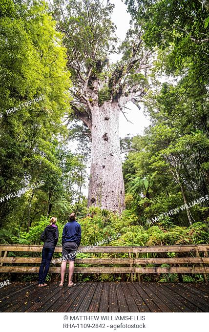 Tourists at Tane Mahuta (Lord of the Forest), the largest Kauri Tree in New Zealand, at Waipoua Kauri Forest, Northland, North Island, New Zealand, Pacific