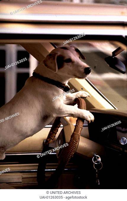 Rocky oder Dennis? *** Local Caption *** 1996, Dogmatic, Hilfe Ich Bin Mein Hund... Und Mein Hund Ist Ich