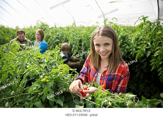 Portrait smiling girl picking tomatoes in greenhouse