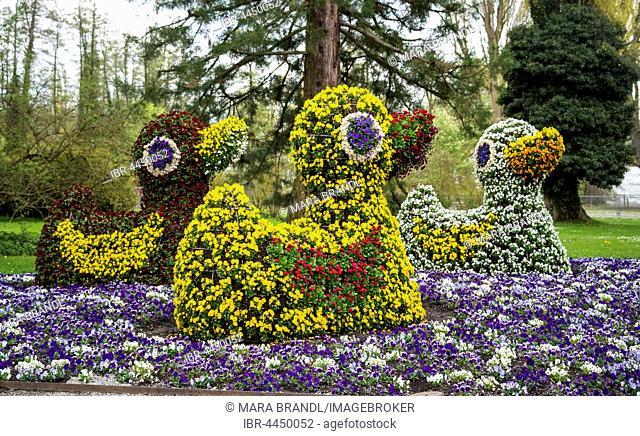 Flower sculptures, ducks made of flowers, Mainau, Lake Constance, Baden-Württemberg, Germany