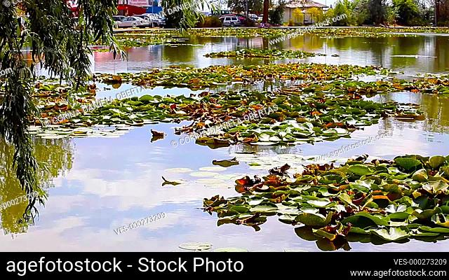 View of small lake with water lilies in Neptun on the Black Sea Coast, Romania