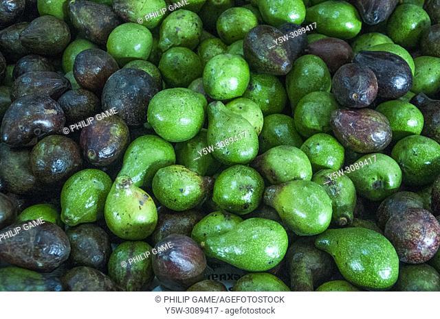Local avocados, Central Market, Kota Kinabalu, Sabah, Malaysian Borneo