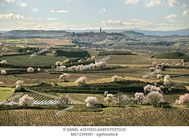 Briones village in Rioja Alta wine regio and almond trees in blossom, Rioja wine region, Spain, Europe