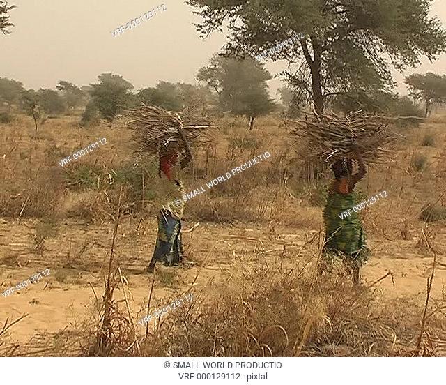 Women carrying bales of wood. Kenya