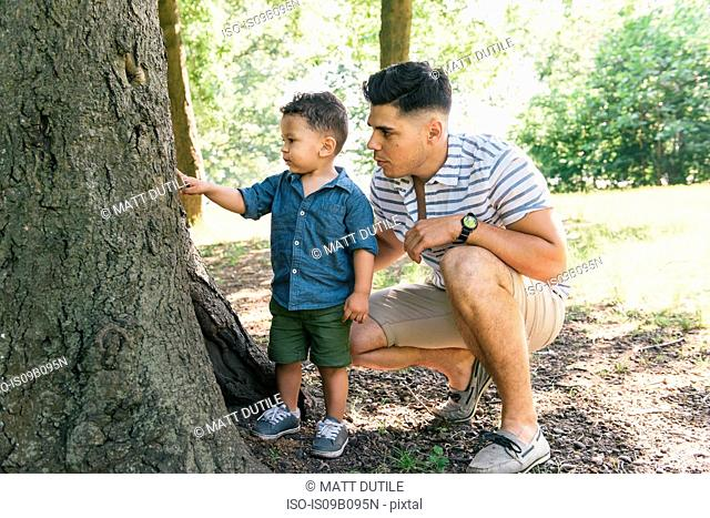 Male toddler with father pointing at tree in Pelham Bay Park, Bronx, New York, USA