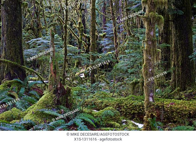 Moss covered trees and grounds in a temperate rainforest