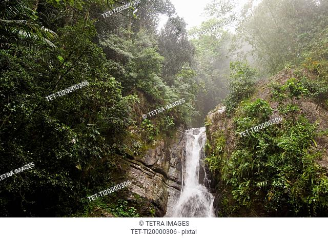 Puerto Rico, El Yunque National Forest, La Mina Falls in forest