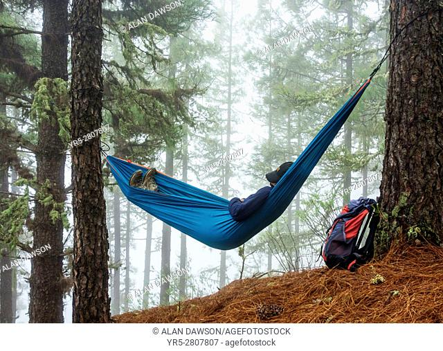 Female hiker relaxing in hammock in misty pine forest in mountains of Gran Canaria, Canary Islands, Spain. Model Released