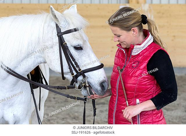 German Riding Pony. Rider after a riding lesson giving a white pony a treat. Germany