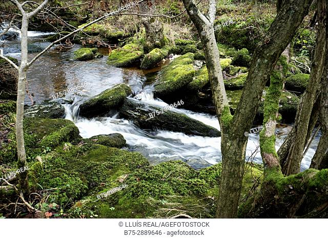 River with trees and moss on the rocks. River Wharfe, Cray, Buckden, North Yorkshire, Yorkshire Dales, England