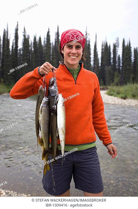 Young woman fishing, presenting her catch, Arctic graylings (Thymallus arcticus), upper Liard River, Yukon Territory, Canada