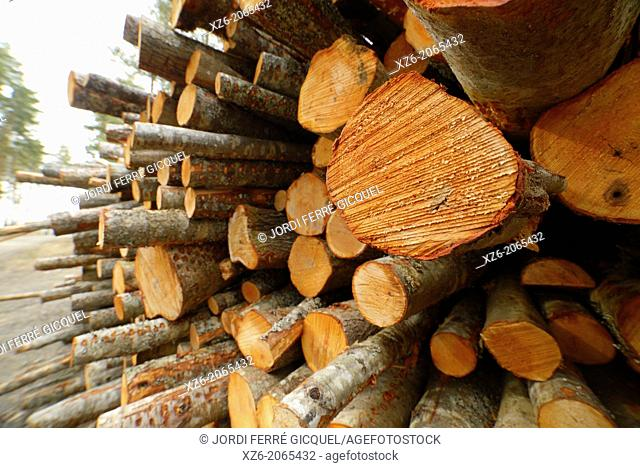 Trunks pile in a commercial plantation, North Karelia, Finland, Europe