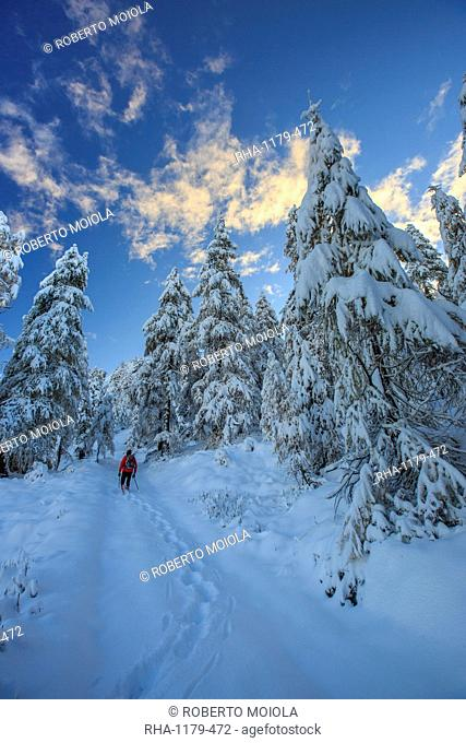 Hiker on snowshoes ventures in snowy woods, Casera Lake, Livrio Valley, Orobie Alps, Valtellina, Lombardy, Italy, Europe
