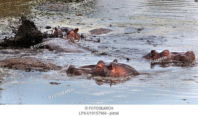 action, Central, Tanzania, Serengeti, National Park, activity, Africa