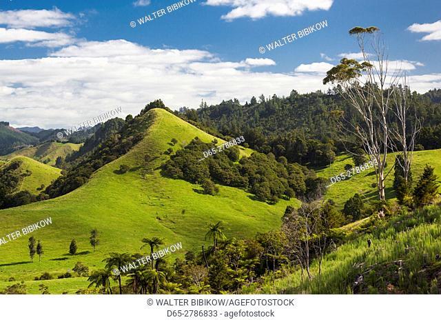 New Zealand, North Island, Coromandel Peninsula, Wharekawa, landscape