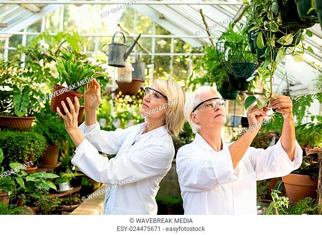 Female scientists examining potted plants